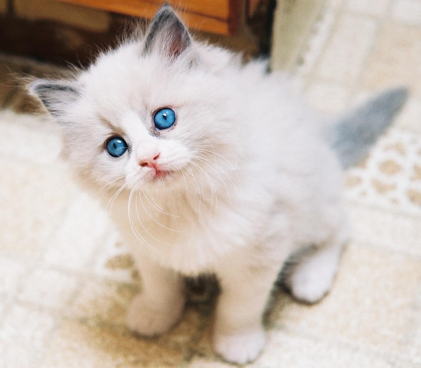Mendadak Suka Kucing Dan Jadi Pengen Punya Dear Ifan